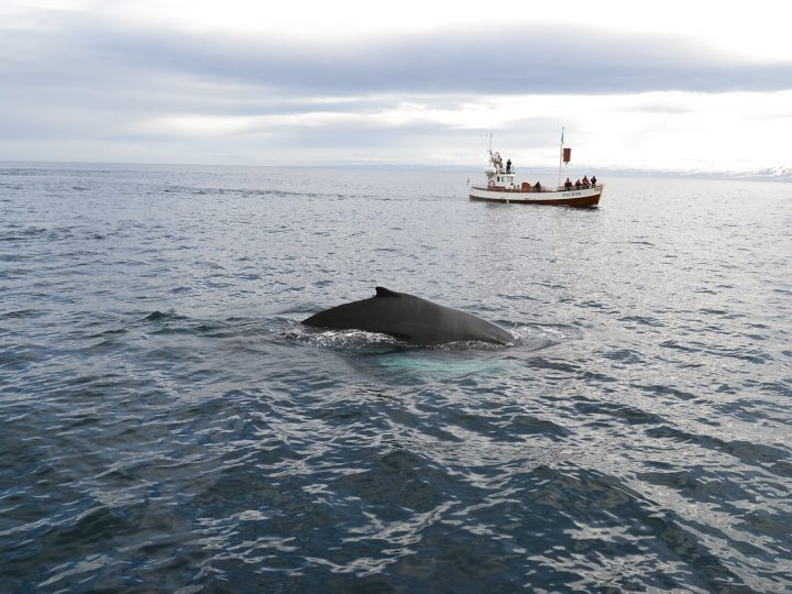 Why You Should Consider Going Whale Watching As Soon As Possible